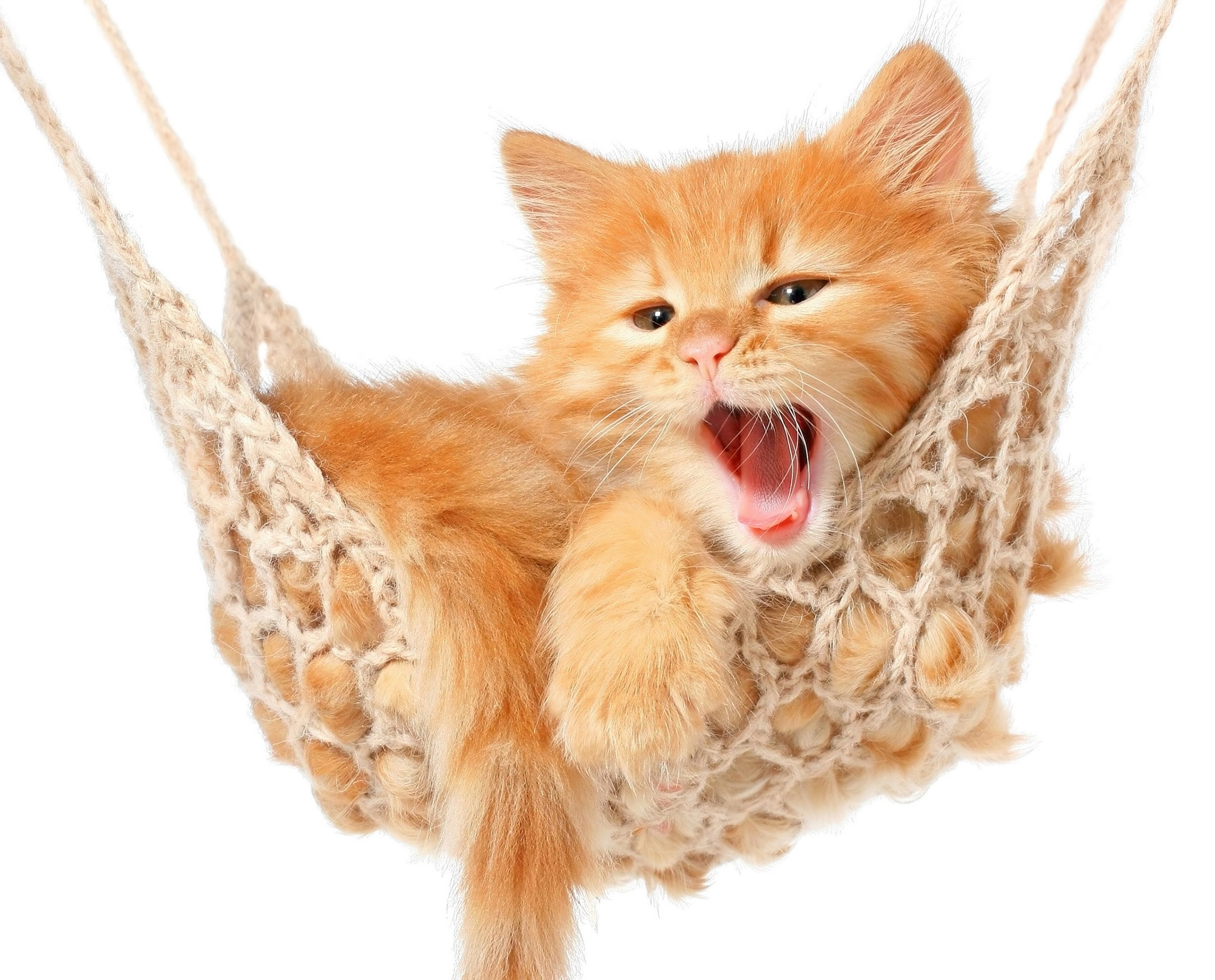 cats, Ginger, Color, Kitten, Animals Wallpaper
