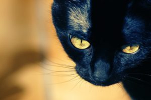 cat, Kitten, Eye, Face