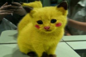 cat, Cats, Kitten, Baby, Pokemon, Cosplay