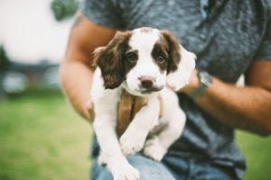 dogs, Puppy, Hands, Animals