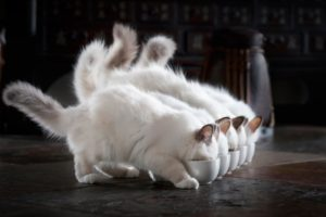 kittens, Kitten, Cat, Cats, Baby, Cute, S