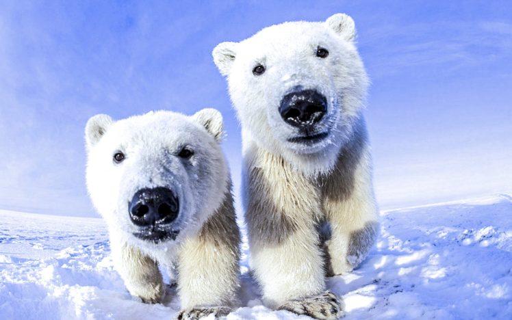polar, Bear Wallpapers HD / Desktop and