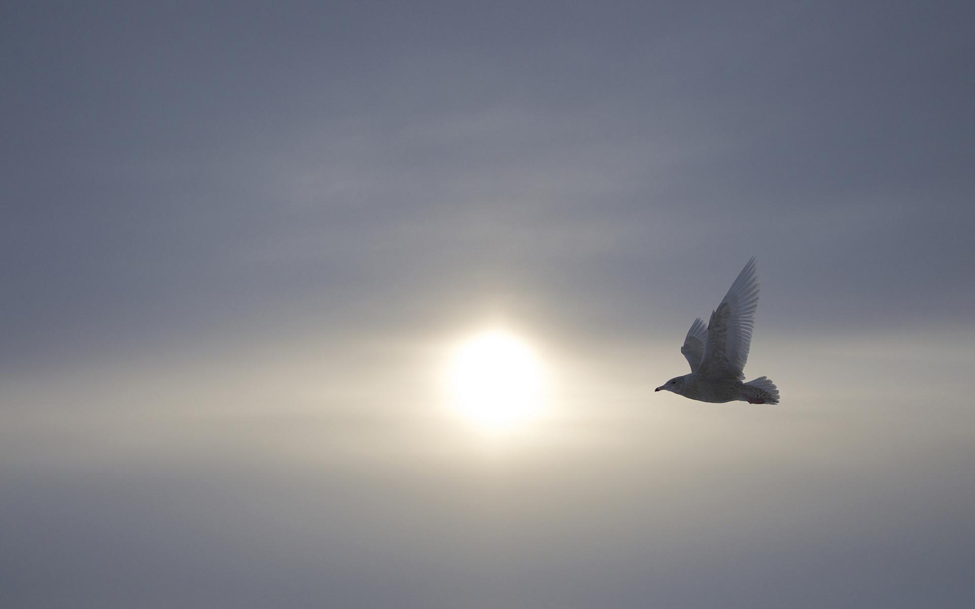 Αποτέλεσμα εικόνας για bird sky