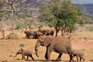 animals, Elephant, N