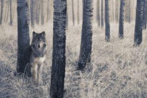 wolf, Trees