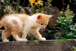 animals, Cats, Felines, Kittens, Fur, Whiskers, Face, Eyes, Paws, Plants, Garden, Wood, Flowers, Babies, Cute