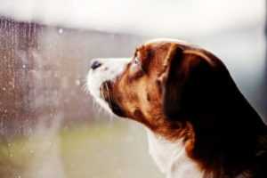 animals, Dogs, Window, Panes