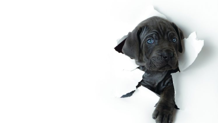 white, Animals, Dogs HD Wallpaper Desktop Background