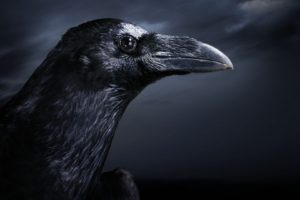 black, Dark, Birds, Ravens