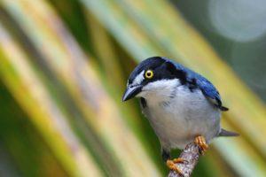 brazilian, Wild, Birds, Brazil