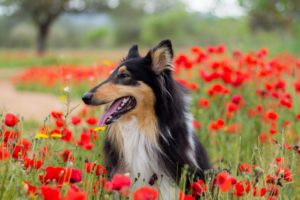 dog, Flowers, Flower, Spring, Meadow