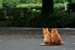 animal, Cute, Cats, Couple, Sitting