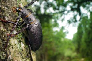 escarabajo, Cornudo, Arbol, Insecto