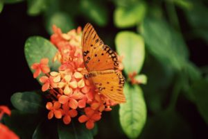 nature, Flowers, Butterfly, Orange, Insects, Depth, Of, Field