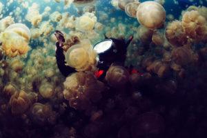 jellyfish, Underwater, Ocean, Sea, Bokeh, Jelly,  9