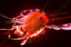 animals, Fish, Cg, 3d, Digital art, Manipulations, Colors, Orange, Bright