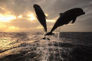 jumping, Dolphins, Sea