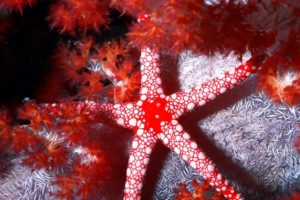 starfish, Ocean, Sea, Sealife, Fish, Bokeh