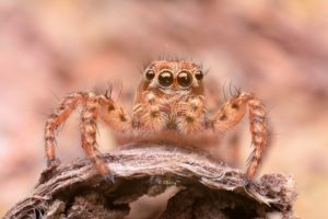 animals, Eyes, Insects, Macro, Spiders
