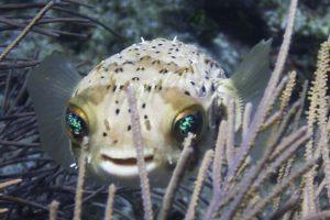 fish, Fishes, Underwater, Sealife, Ocean, Sea, Water