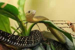 snake, Leaves, Macro