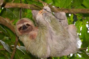 animals, Hanging, Sloth