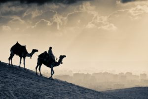 two, Camels, In, The, Desert
