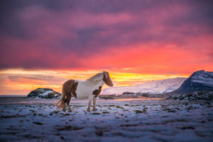 iceland, Wind, Mountains, Snow, Horse