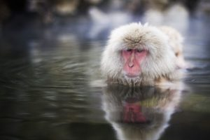 water, Animals, Snow, Monkey, Japanese, Macaque