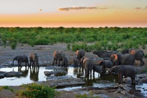 water, Elephants, Africa, Drinks, Mammals, Baby, Elephant, Baby, Animals