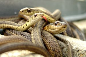 animals, Snakes, Reptiles, Eyes, Face, Aquarium