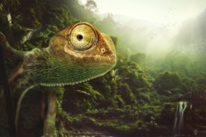 reptile, Forest, Chameleon, Animals, Jungle, Artwork, Lizard