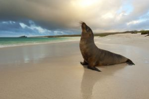 seals, Animals, Sea, Beaches