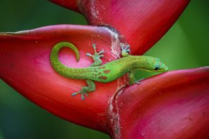animals, Lizard, Tropical, Jungle, Colorful, Color, Green, Bokeh