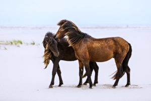 horses, Lovers, Friendship, Relationship, Beaches, Sand, Wind, Animals, Romance, Emotions, Landscapes, Nature