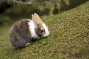 green, Animals, Rabbits