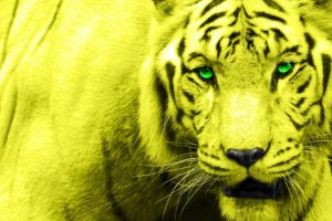 tiger, Face, Yelow, Eyes, Green, 2048×1363