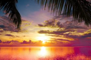 sunset, Palms, Sea, Beautiful, Nature, Landscape, Water, Sky, Clouds, Reflection
