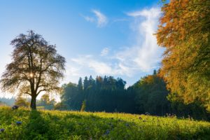switzerland, Trees, Meadow, Flowers, Autumn, Fall, Sky, Landscape