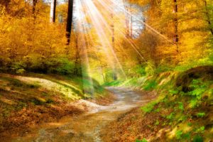 landscape, Nature, Golden, Autumn, Leaves, Yellow, , Forest, Trees, Walkway, Sunlight