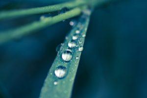 dew, Drops, On, A, Grass, Leaf