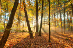 landscapes, Nature, Trees, Forest, Autumn, Fall, Seasons, Leaves, Sunlight, Sunbeams