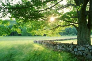 nature, Landscapes, Fields, Grass, Trees, Sun, Sunlight, Spring, Seasonal, Stone, Fence, Rocks, Leaves