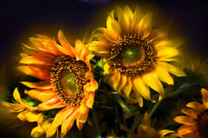 nature, Flowers, Still, Life, Bouquets, Sunflowers, Seed, Petals, Yellow, Thanksgiving, Seasonal, Yellow, Color, Soft, Contrast