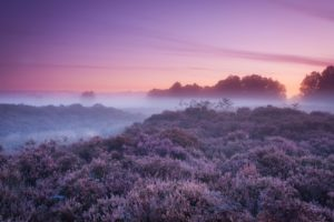 nature, Landscapes, Fields, Autumn, Fall, Seasons, Plants, Fog, Mist, Haze, Sunset, Sunrise, Sky, Clods