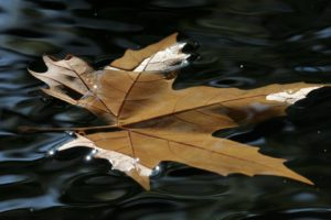 nature, Leaves, Autumn, Fall, Seasons, Water, Ripple, Puddle, Pond, Reflection, Float, Swim