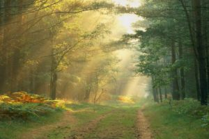 roads, Path, Trail, Tracks, Nature, Landscapes, Trees, Forest, Plants, Leaves, Sunlight, Sunbeam, Light, Rays