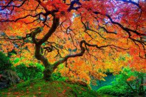 maple, Leaf, Tree, Japanese, Autumn, Season, Natural, Beauty, Hd, Uhd, Ultrahd, 4k, Wallpaper