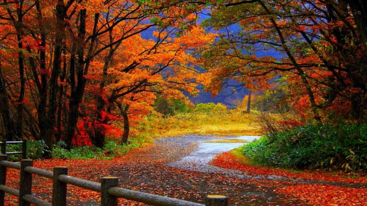 autumn, Fall, Trees, Fence, Path, Trail, Colorful, Leaves, Foliage HD Wallpaper Desktop Background