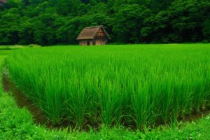 fields, Grass, Nature, Houses, Jungle, Forest, Green, Landscapes, Agriculture, Countryside, Trees